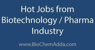 Jobs for Biotechnology Degree: Biotechnology jobs have been popular over the years. Biotech Jobs, Careers, Jobs for masters in biotechnology... Hot Jobs from Biotechnology / Pharma Industry | BioChemAdda.com