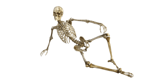 skeleton-1561177_960_720.png