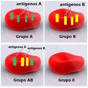 Los grupos sanguíneos 1