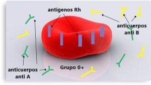 Los grupos sanguíneos 3
