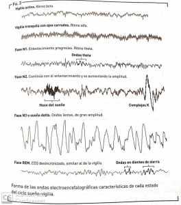 Cómo funciona el cerebro mientras dormimos. Ondas cerebrales. Fuente: La naturaleza del sueño (National Geographic, 2017)