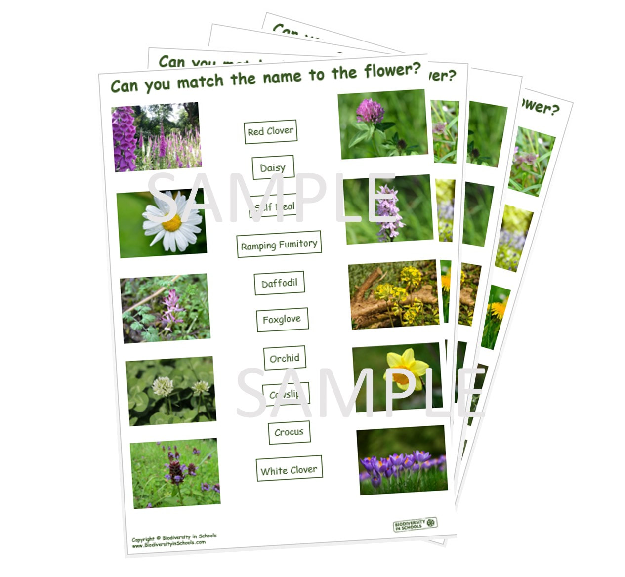 Match The Flower To The Name Worksheets