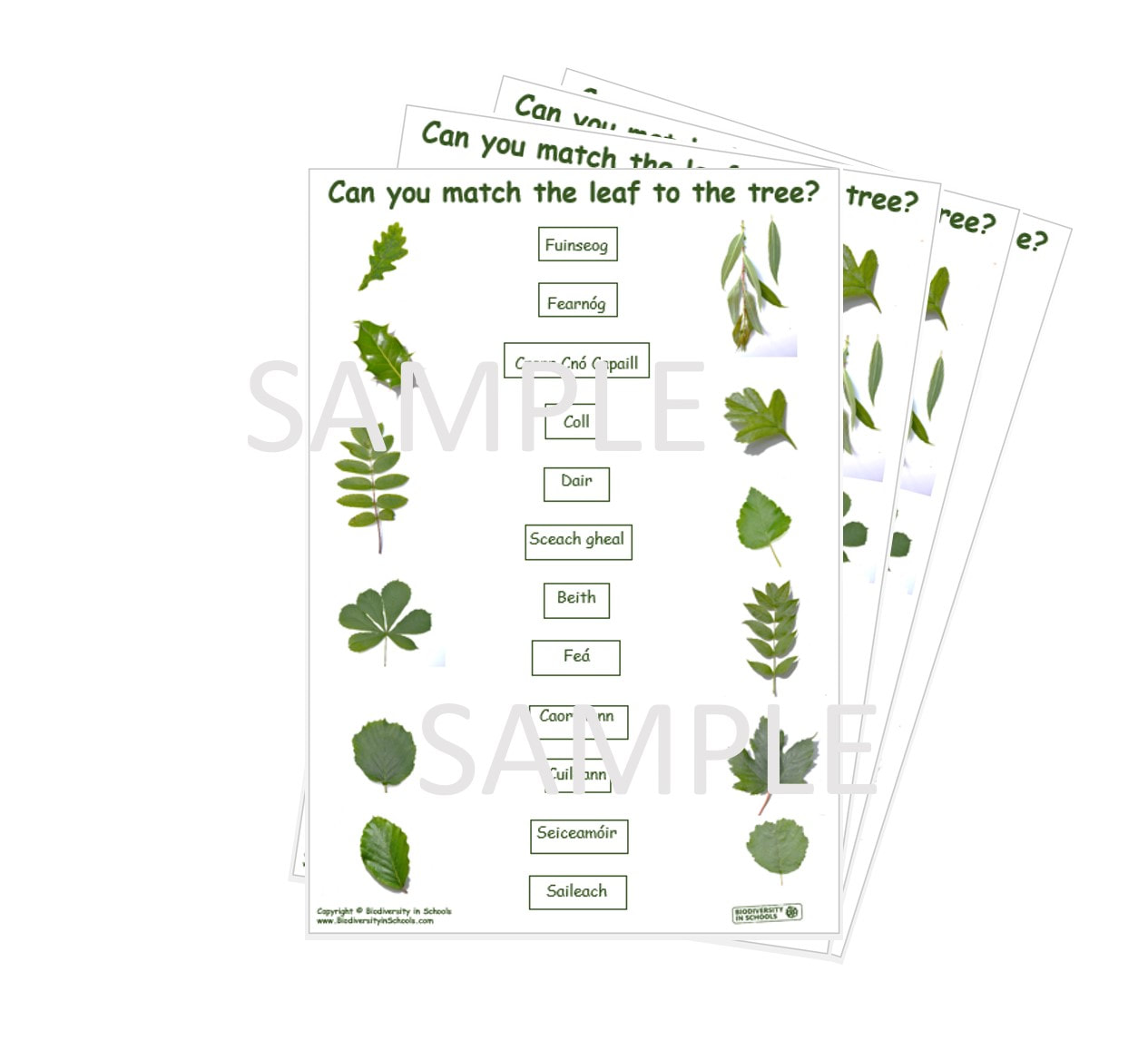 Match The Tree To The Name Worksheets