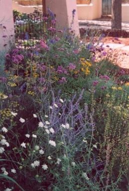 Maggie Lee garden