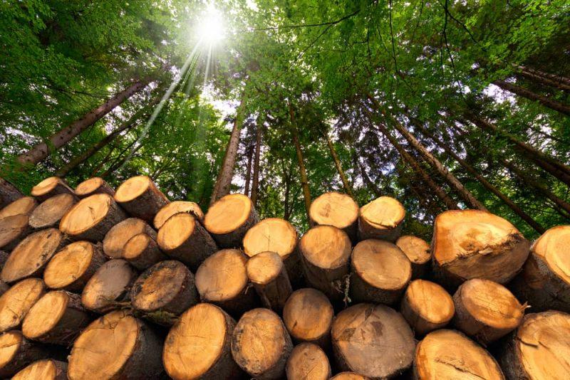 Resultado de imagen para energía biomasa