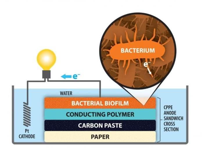 Celda de combustible bacteriano