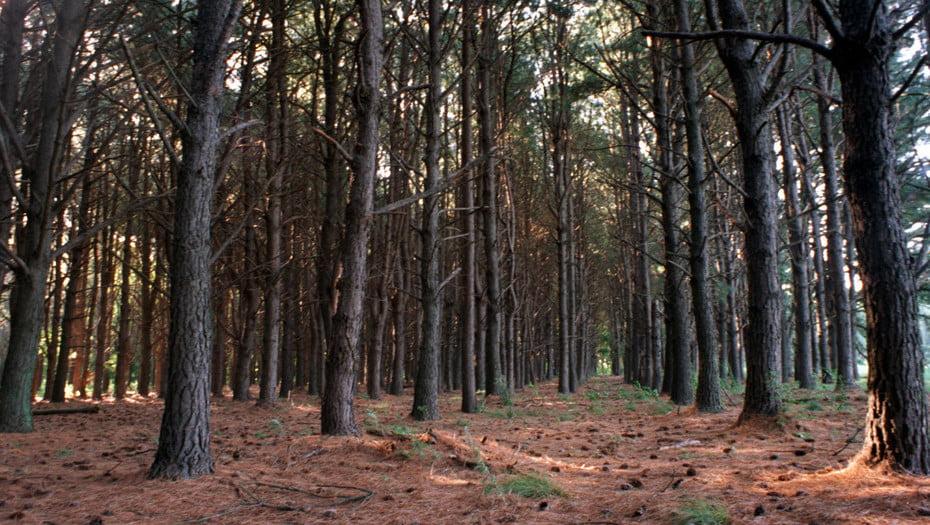 Europa apura llevar la silvicultura al mercado del carbono