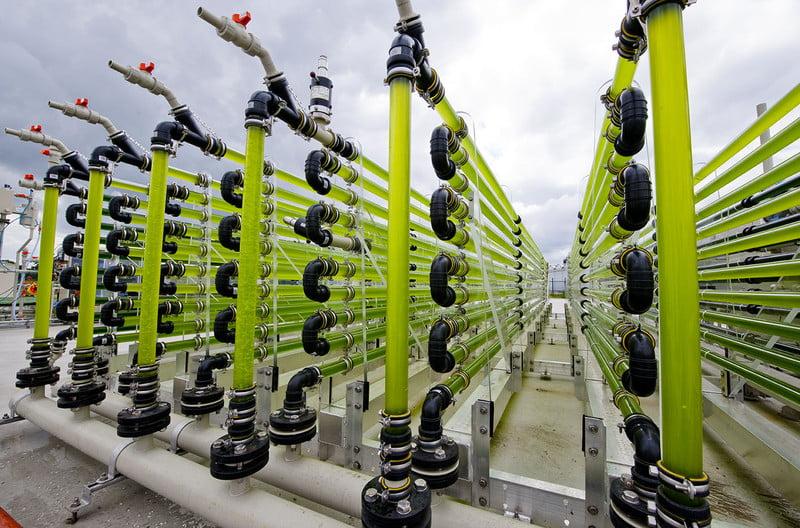 Biorrefinería brasileña convertirá algas en productos para la química renovables