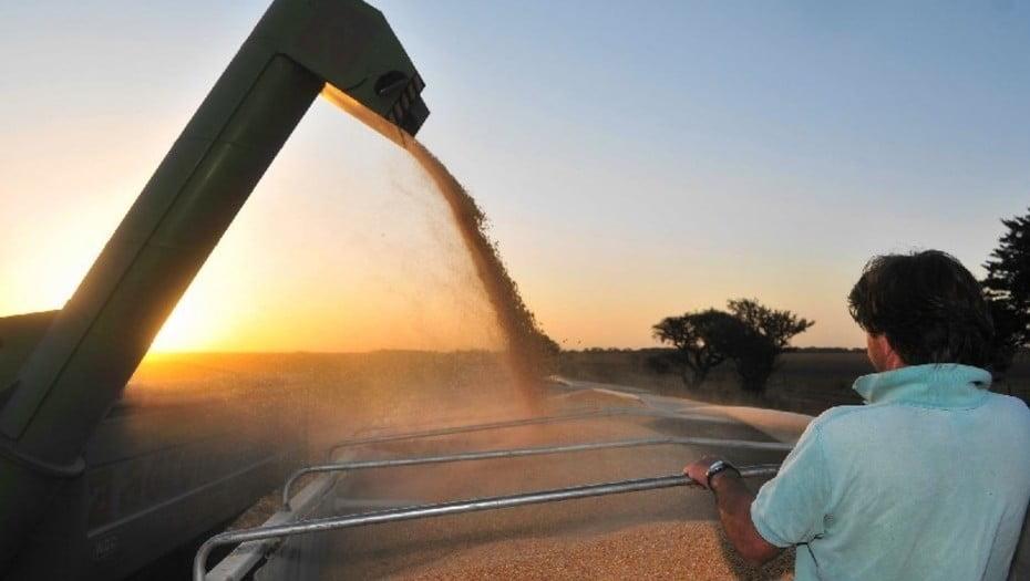 AO pronostica aumento de la producción mundial de cereales