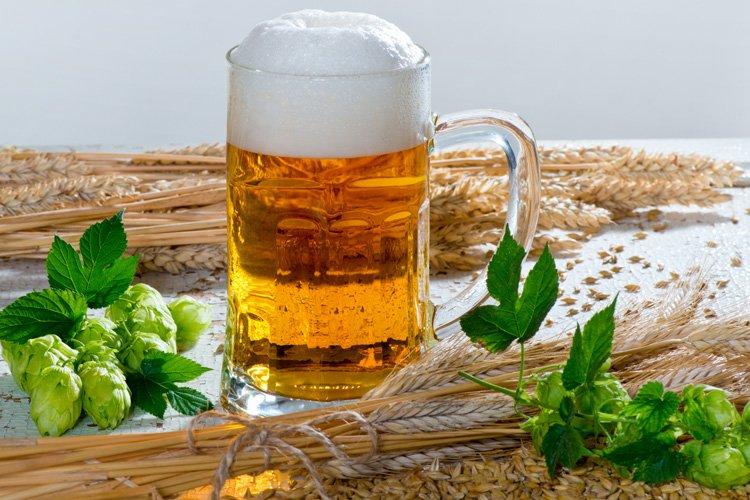 Desarrollan cerveza sustentable con sabor a lúpulo utilizando solamente levaduras transgénicas