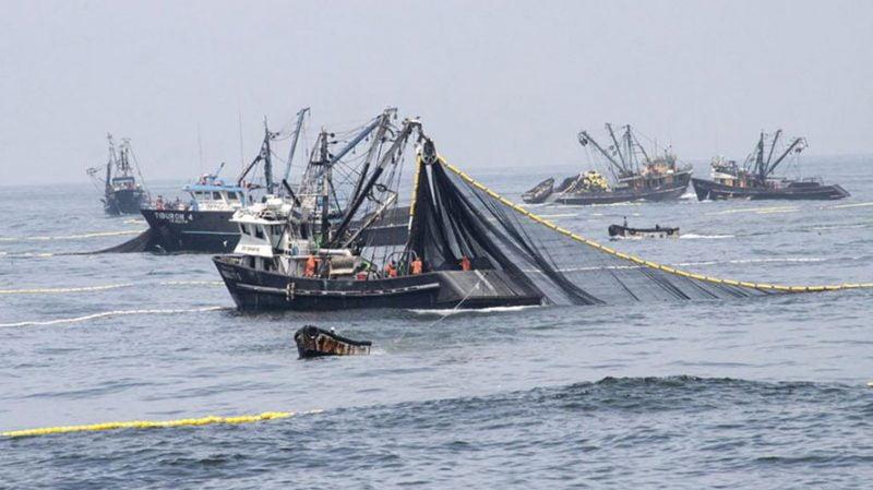 En busca de máyor sustentabilidad Cargill reemplaza aceite de pescado en alimento acuícola