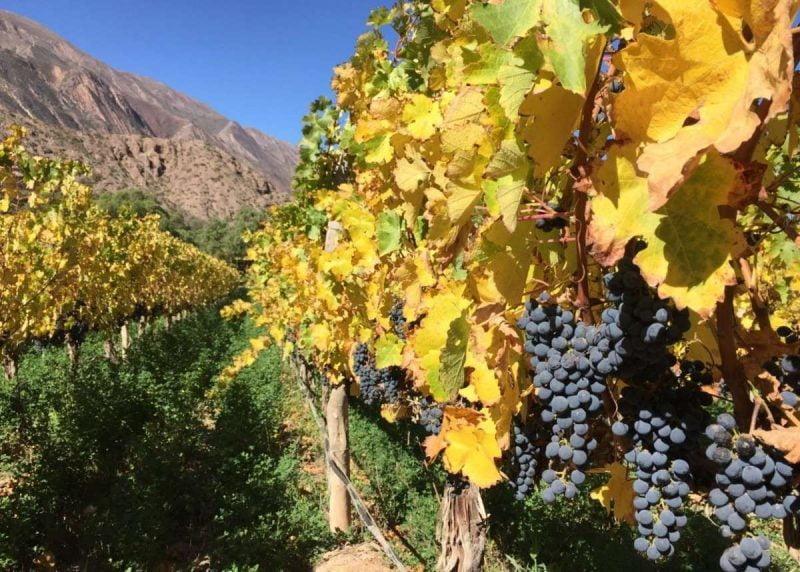 Jujuy: vinos de extrema altura sobre el trópico de Capricornio