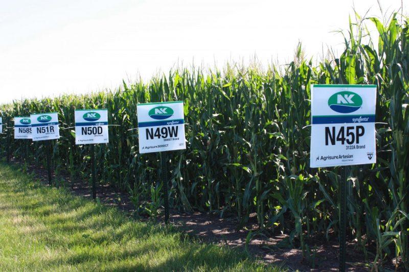 NK refuerza su campaña de maíz con híbridos a la medida de cada región