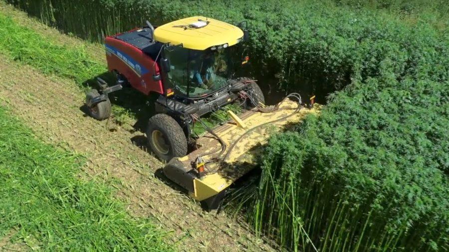 A pesar de las enormes expectativas, el cultivo de cáñamo se hunde en EEUU