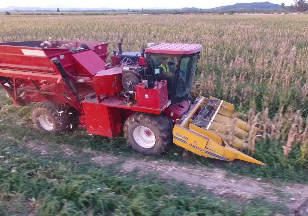 Los semilleros pusieron primera y largaron la cosecha de maíz 2020