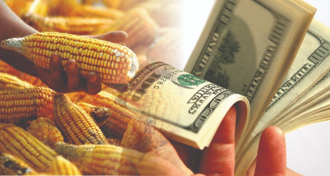 Farmers de EEUU preocupados por la competitividad del maíz brasileño