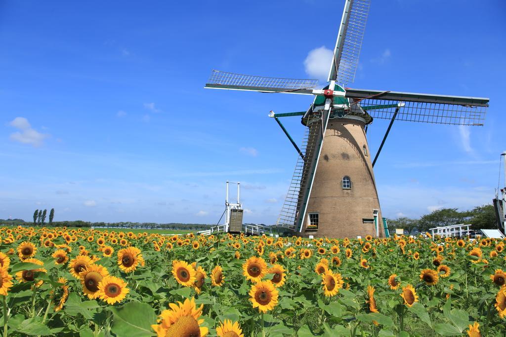 Productores europeos piden a Bruselas medidas para contener la importación de proteínas, aceites y biocombustibles