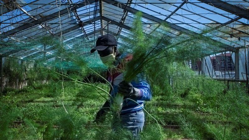 España busca 75.000 desempleados e inmigrantes para trabajar en el sector agrícola