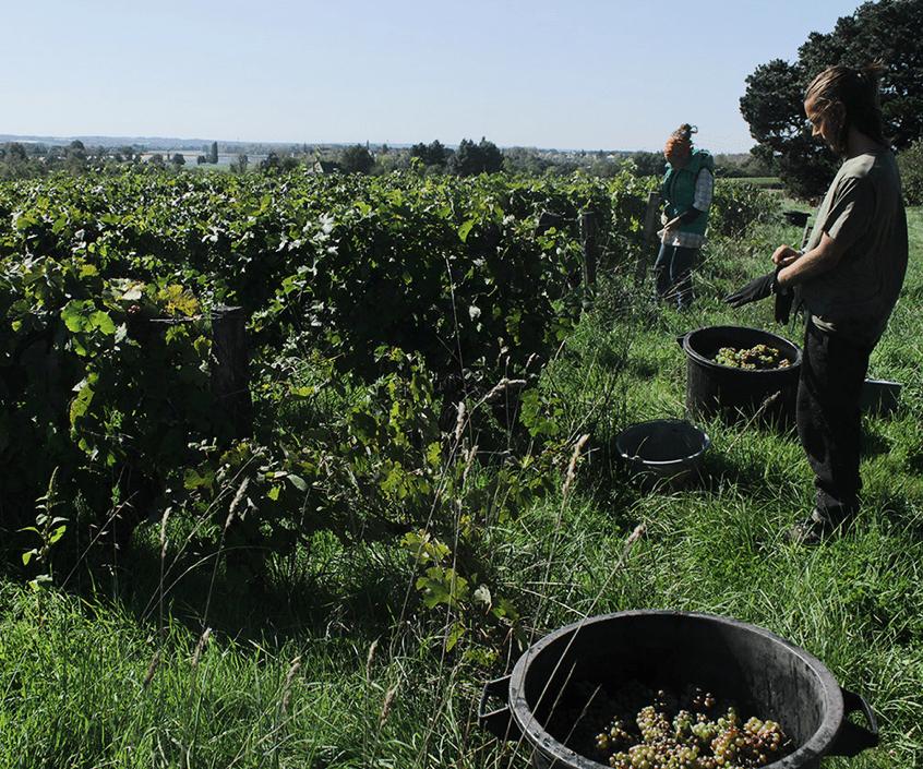 En Francia ya rige la denominación contralada para el vino natural