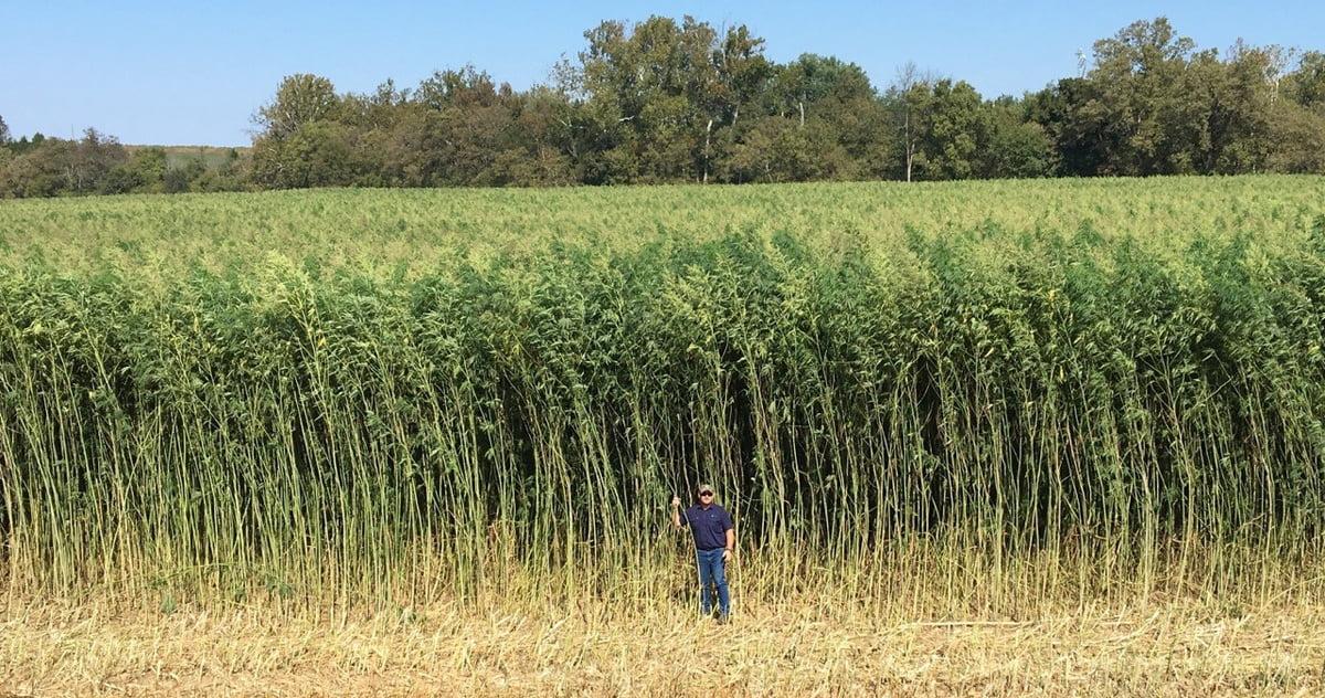 Empresa de cannabis invierte U$S 1.500 MM para producir biocombustibles
