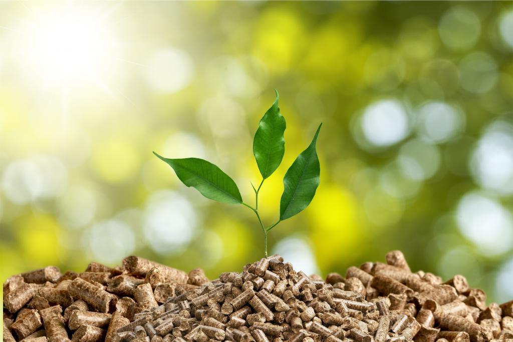 El Acuerdo Verde Europeo podría desencadenar el verdadero potencial de las bioenergías