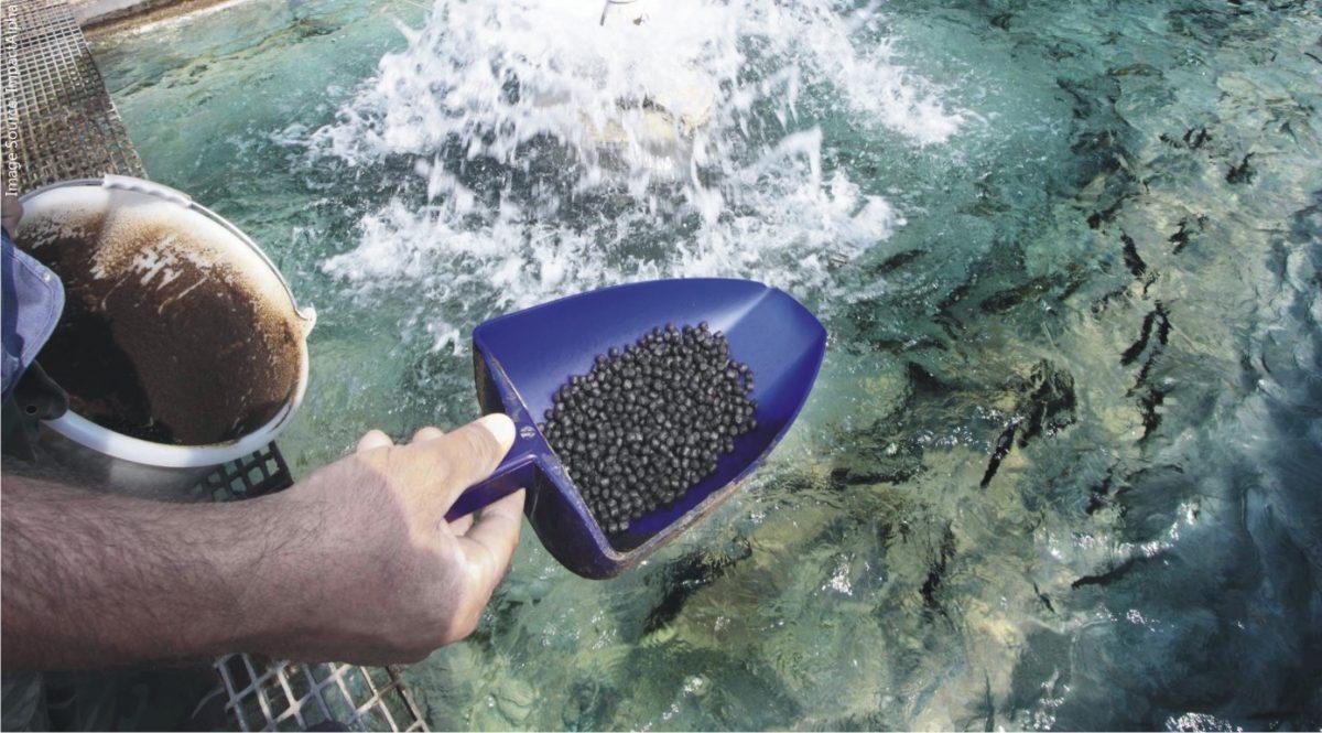 Economía circular al palo: producen proteínas para nutrición ganadera a partir de emisiones de CO2