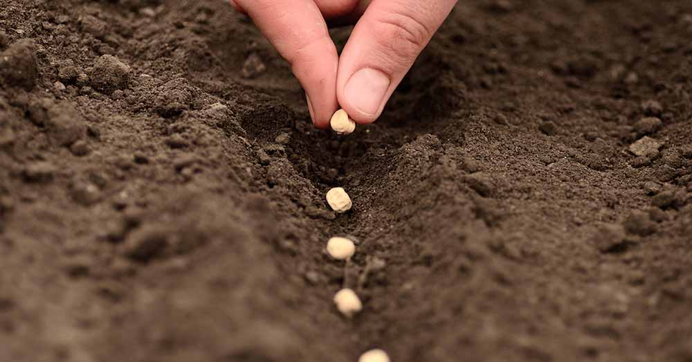 Europa también debate la propiedad intelectual de las semillas
