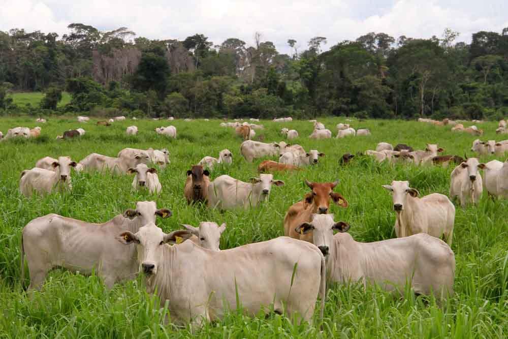 Brasil produce más carne en menos superficie