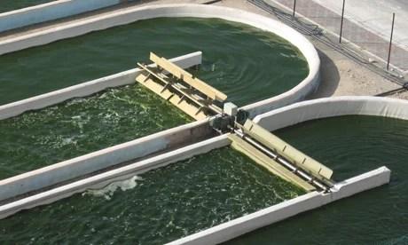 algae-middle-east