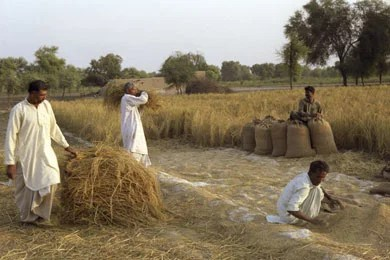pakistanbiomass