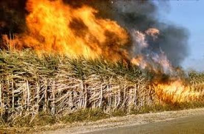 sugarcane-trash-burning