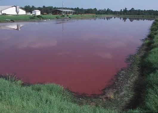 slaughterhouse waste