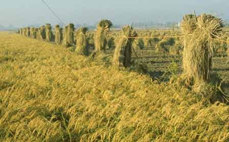 bioenergy-china