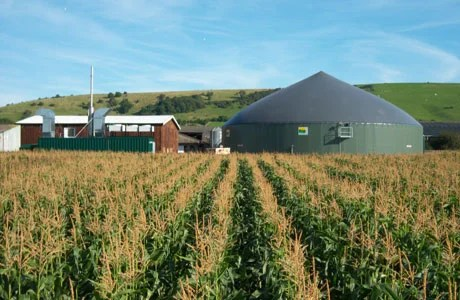 energy-crops-biogas