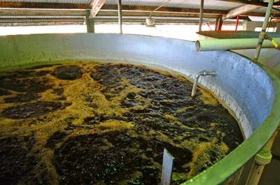 Sugarcane molasses is the most common feedstock for bioethanol production in India