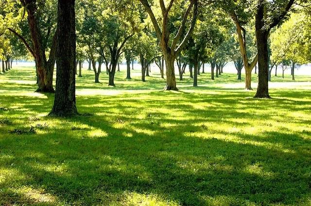 trees-sustainability