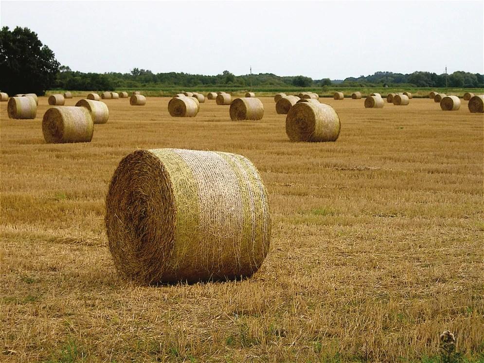 Unending Benefits of Biomass Energy