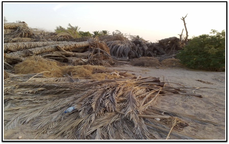 date-palm-waste