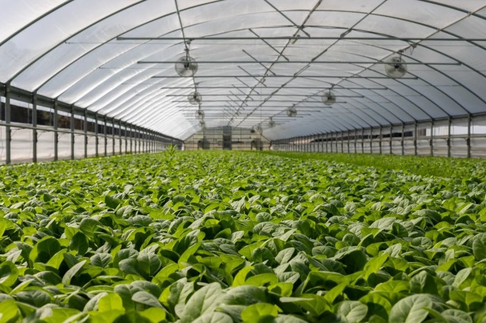 Why Greenhouse Ventilation is Essential