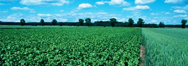 Certification-des-biocarburants-durables-le-bioethanol-de-betterave