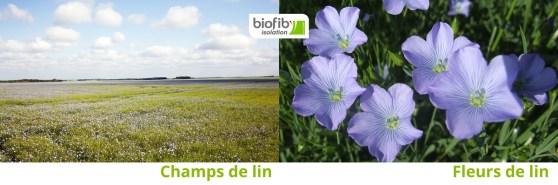 Fleurs et champs de lin