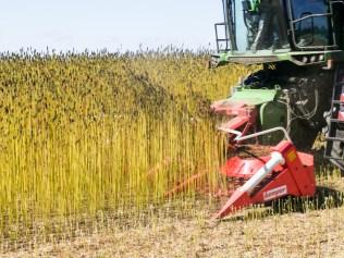 recolte-chanvre-2016-biofib-13