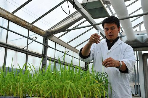 Plant breeding scientist. Image from the International Atomic Energy Agency (IAEA), by Dean Calma via Flickr.