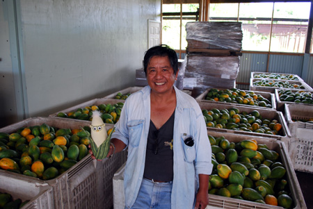 GMO Papayas are about People