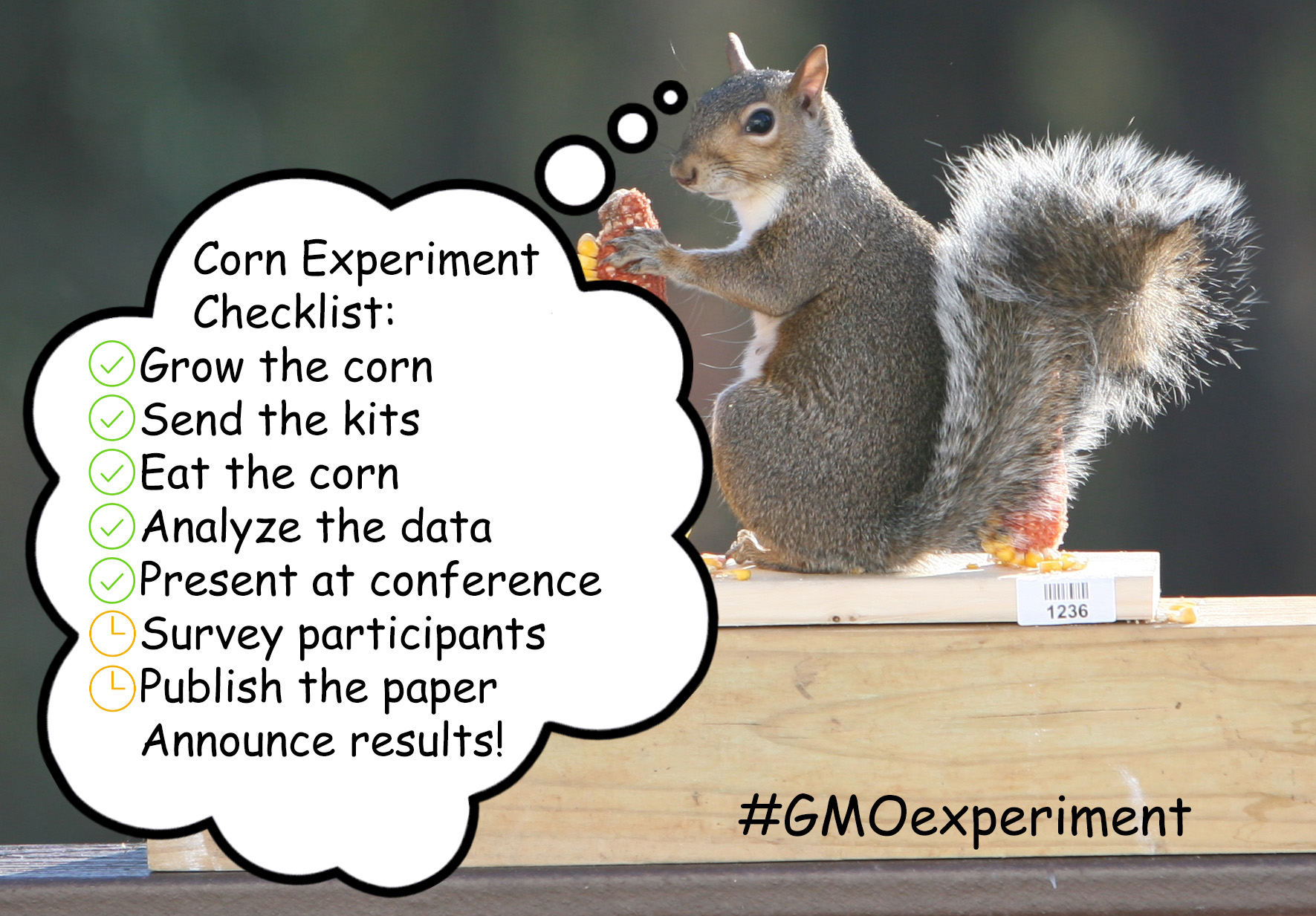 Final steps on the GMO Corn Experiment