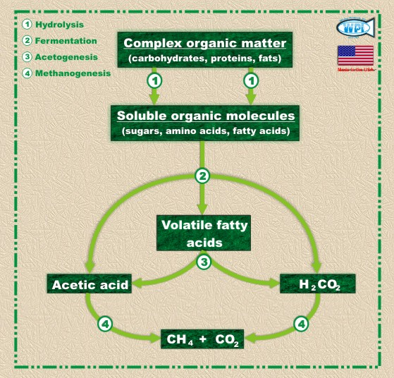Anaerobic Digestion Process and Cycle. Disintegration of Gas Lacking Oxygen. Loss of Unrestricted Oxygen Creating Biogas.