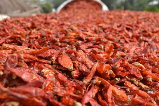Kofi Vinyo dry pepper