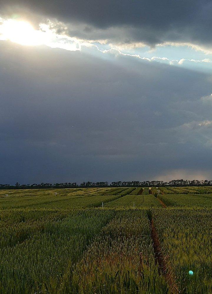 Biogranum DH fields