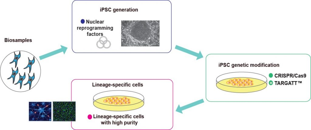 Applied StemCell iPSC Genome Engineering