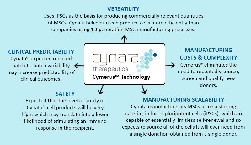 There are 5 major advantages to Cynata's Cymerus technology platform, which include: 1. Versatility – Using iPSCs as the basis for producing commercially relevant quantities of MSCs. 2. Manufacturing Costs and Complexity – Cymerus eliminates the need to repeatedly source, screen and qualify new donors. Comparability studies are not required for Cymerus product as the source is always the same. 3. Manufacturing Scalability – Cynata manufactures MSCs using a starting material, iPSCs, which are capable of essentially limitless self-renewal and so expects to source all cells from a single donation from a single donor. 4. Safety – It is expected that the level of purity of Cynata's cell products will be very high, which may translate into a lower likelihood of stimulating an immune response in the recipient. 5. Clinical Predictability – Cynata's expected reduced batch-to-batch variability may increase predictability of clinical outcomes. With expansion at the level of the iPSC starting material the efficacy issues associated with senescence are minimized.